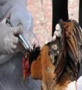السعودية تسجل اصابة بمرض انفلونزا الطيور