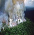 """كارثة تهدد الارض بسبب احتراق مليارات الاشجار في """"رئة الكوكب"""""""