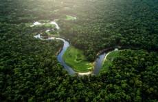 غابات الأمازون تباع على فيسبوك بشكل غير قانوني!