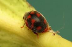 كيف يمكن للحشرات أن تنقذ حياة ملايين البشر؟