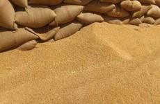 وزارة التجارة: مستمرون بتجهيز المطاحن بالحصص المقررة من الحنطة المحلية