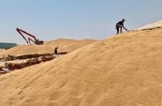وزارة التجارة تخصص 253 مليار دينار للفلاحين المسوقين لمحصول الحنطة