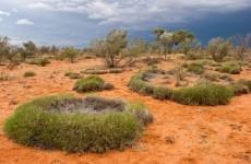 علماء يحددون أسباب الشكل الحلقي الغامض للنباتات في الحقول الصحراوية الأسترالية