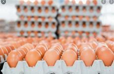 الزراعة تحدد سعرا جديدا لبيض المائدة