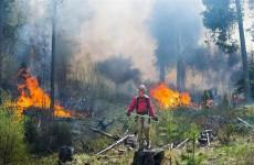 دراسة: دخان حرق الأخشاب يزيد من فرص الإصابة بكورونا