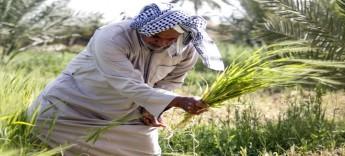 مسؤول عراقــي: أزمة المياه تدفع إلى حظر زراعة 8 محاصيل صيفية