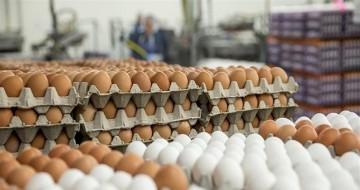 قرار جديد من وزارة الزراعة بشأن بيض المائدة