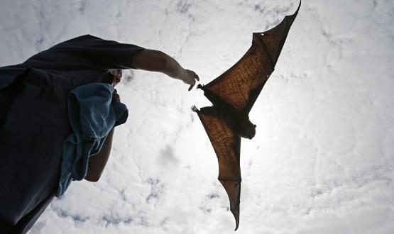 العلماء يكتشفون نوعا جديدا من الخفافيش